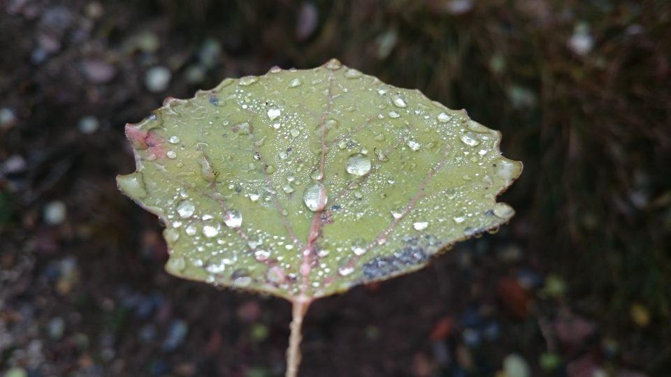 photographyIdea-foto-autunnali-dopo-un-acquazzone
