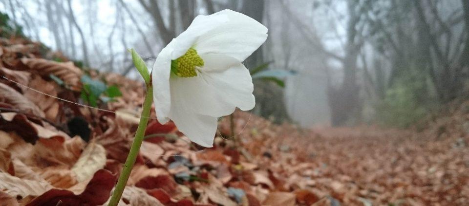 photographyidea-sfruttiamo-la-nebbia-nelle-nostre-foto-autunnali