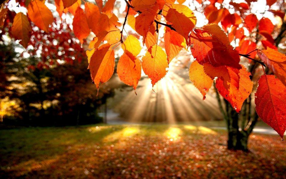 photographyidea-fotografare-in-autunno-controluce
