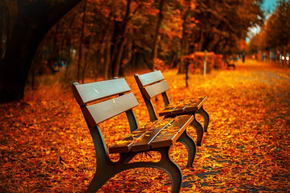 photographyidea-ide-per-fotografare-in-autunno-foliage